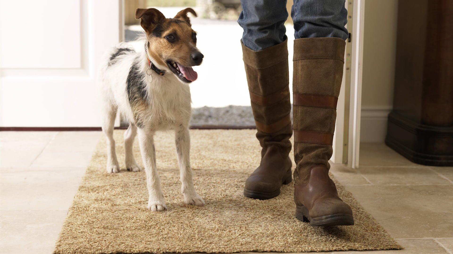 Pet Safe Floor Cleaner Dog